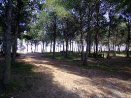 Parc de Montalbà.jpeg