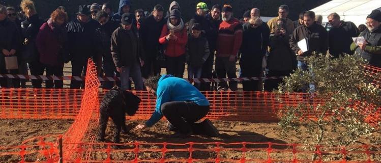 Fira de la tòfona negra i concurs de gossos tofonaires a Vilanova de Prades, 12 de gener