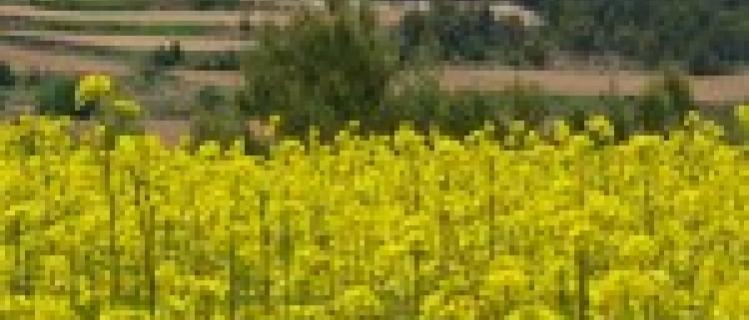 Agricultura Ecologica Josep Mestre