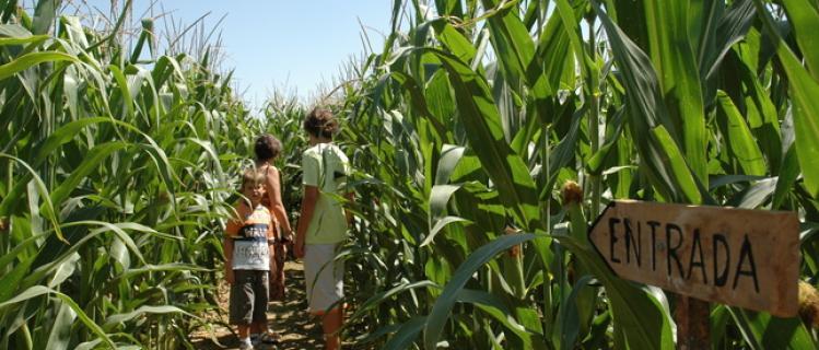El laberint de blat de moro