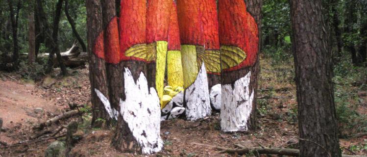 Buscant bolets pintats a Castellfollit