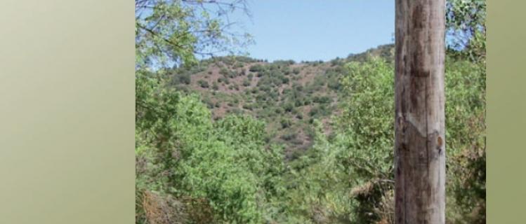 5 Passejades a peu i en bicicleta pels voltants de l' Espluga de Francolí i Vimbodi i Poblet