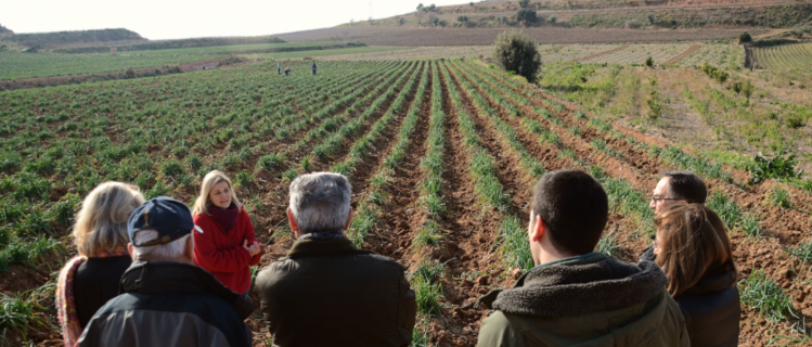 Discover the origin of the calçotada in Nulles