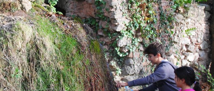 Ruta de natura Alcover